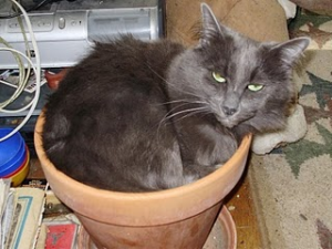 cat indoor potted plant